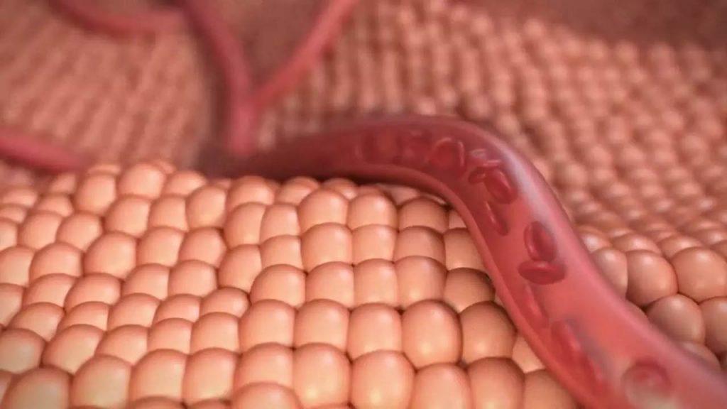 Cinema 4D制作红细胞血管流动医疗动画教程 Animating Blood Flow in a Vessel with C4D