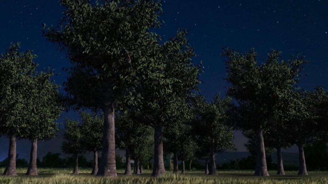 树木随风摆动特效 Houdini风力模拟落叶效果动画教程